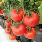 grow with hydroponics 1