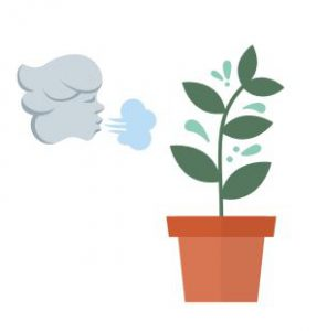 air is vital for plants