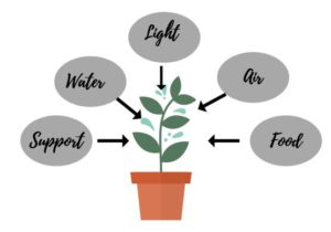 5 things a plant needs to thrive : all elements