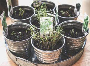 hydroponics vs soil growing : soil