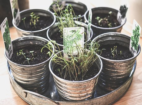 hydroponics vs soil growing : soil