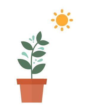 plants need light
