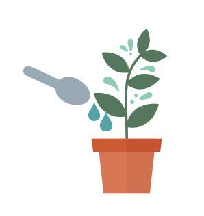 plants need food