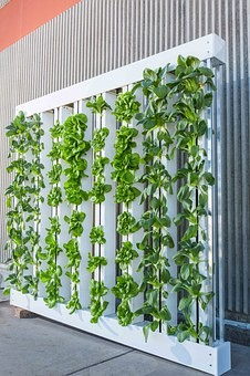 indoor hydroponic stystem