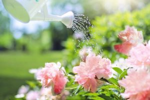 watering the garden loses so much water