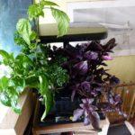 plant growth feb 19 - gone mad