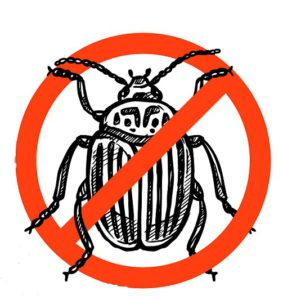 no bugs allowed