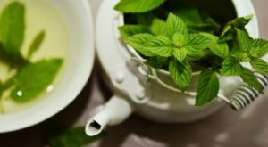 peppermint growing in a teapot